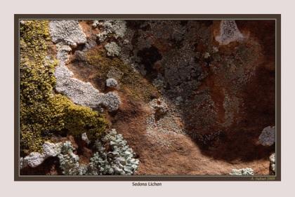 Sedona Lichen