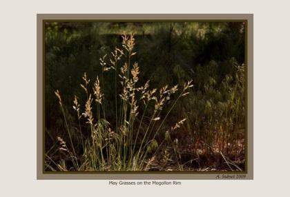May Grasses